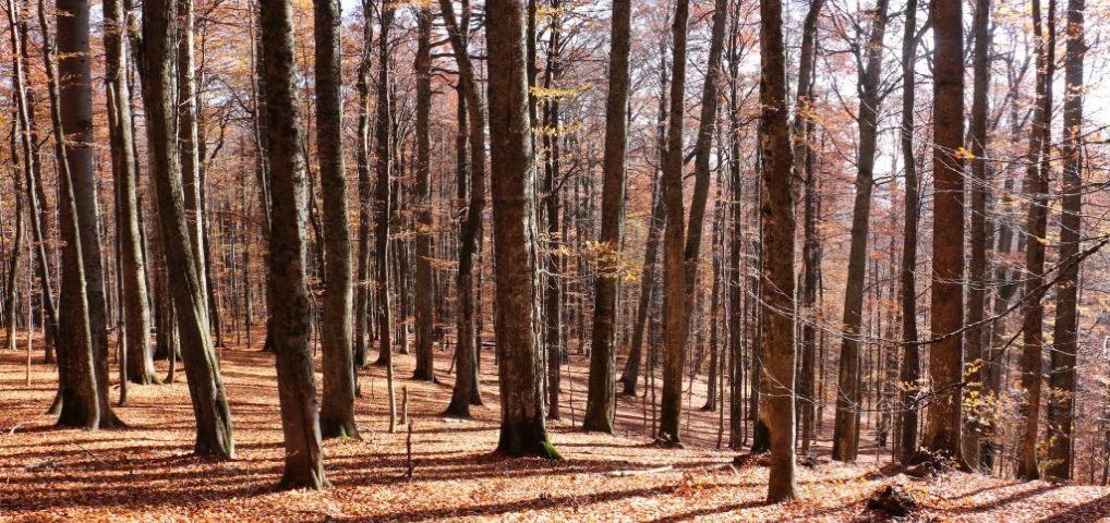 Ultima pădure