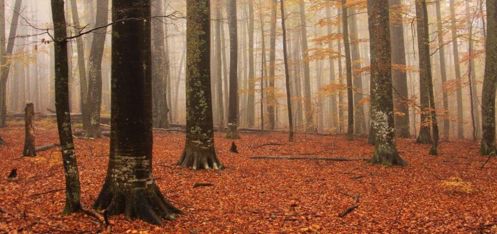 La marginea pădurii